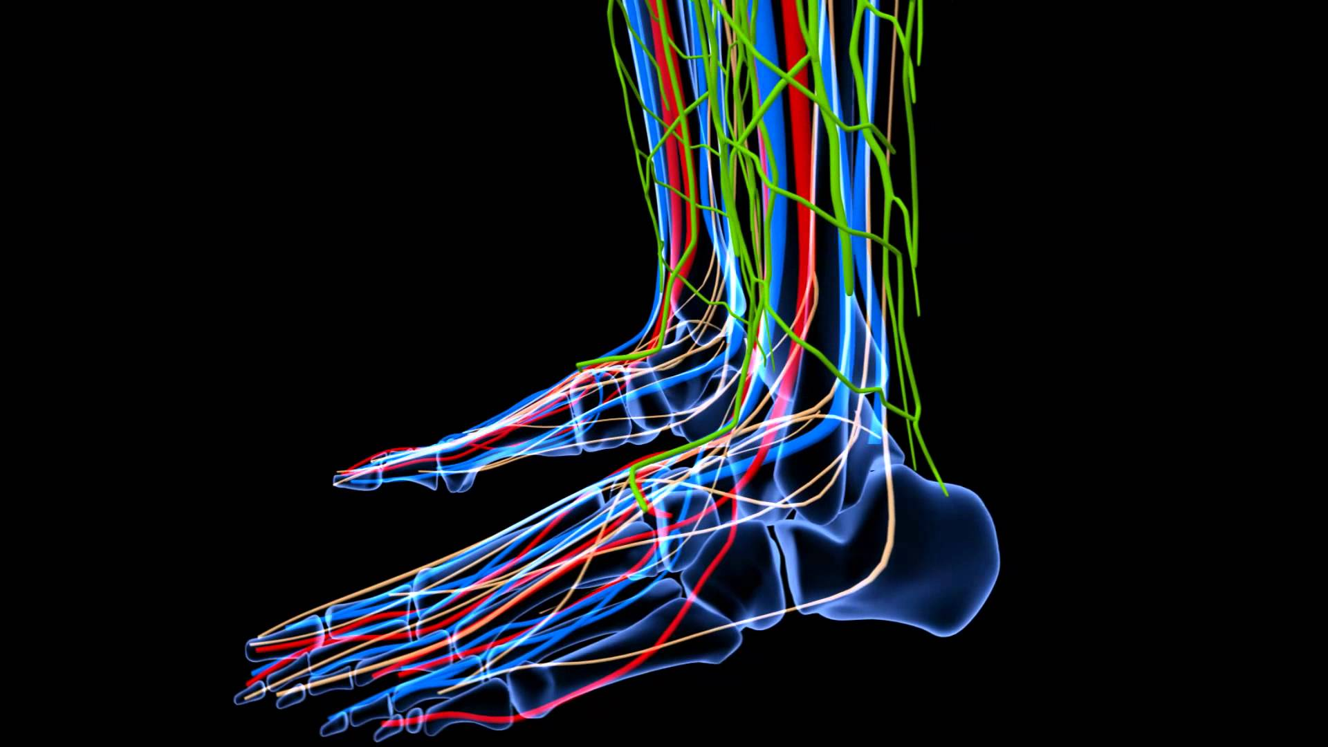 Weight Bearing CT Advances Planning For Forefoot Reconstructive Surgery